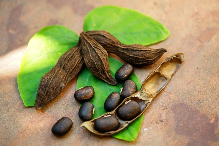 Mucuna Pruriens (L-Dopa): Die 5 wichtigsten gesundheitlichen Vorteile