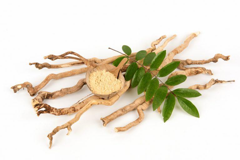 Eurycoma longifolia – natürlicher Testosteron-Booster