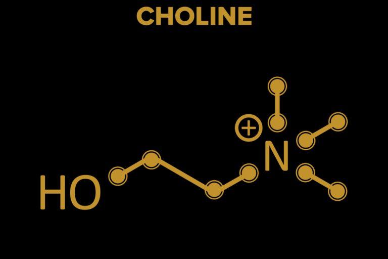 Cholin – Charakteristik einzelner Formen