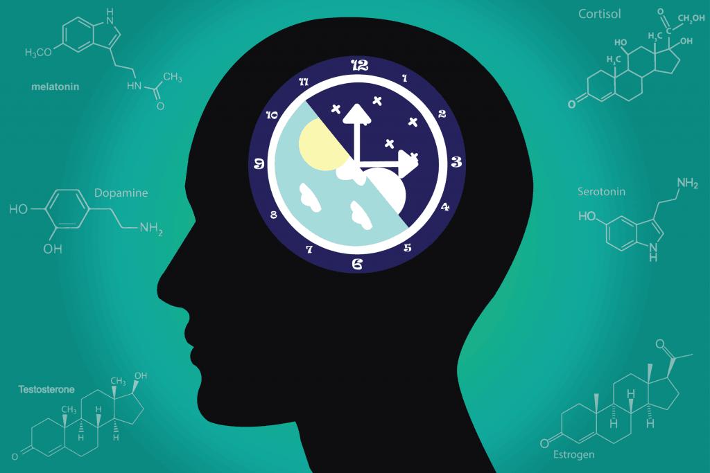 The circadian rhythms